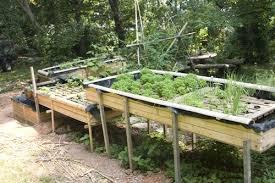 aquaponic gardening. aquaponic gardening n