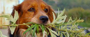 toxic plants that can poison your dog