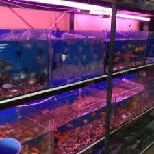 aquarium angel fish aquariam photos ramling khind galli belgaum aquariums