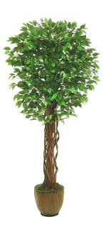 ficus tree arizona outdoor plants for ficus tree outdoor trees t ficus trees outdoor potted plants
