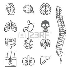 Small Picture Human Body Parts Images Stock Pictures Royalty Free Human Body