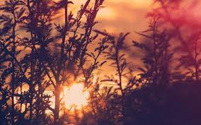 nc30-sunset-tree-light-flare-bokeh ...