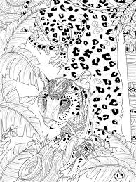 Jungle Leopard Coloring Page Adult Gorgeous Headwear 70974620 Lovely