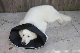 The Comfy Cone All Four Paws