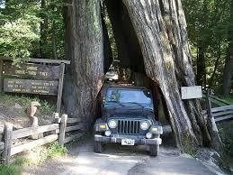 view photos overview overview drive your car through a redwood tree