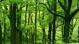 Green Forest, Summer ❤ 4k Hd Desktop ...
