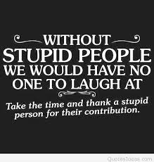 Stupid Quote Funny Delectable Stupid Quotes