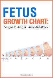 Pregnancy Week By Week Chart Growth Chart Fetal Length And Weight Week By Week Baby