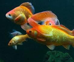 Mardel Fish Disease Chart Fish Disease And Treatment