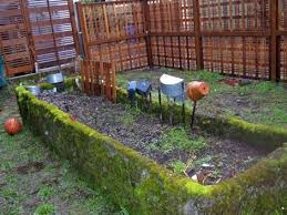 backyard gardening. My Backyard Garden Photo Gardening D