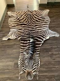 new authentic genuine african burchell zebra skin hide rug beautiful