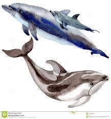 изолированные млекопитающие дельфина одичалые в стиле акварели