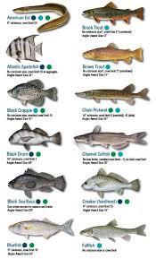 Saltwater Fish Chart Saltwater Fish Chart Texas