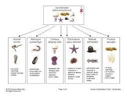 Animal Phylum Characteristics Chart 37 Thorough Animalia Flow Chart