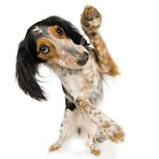 Mein hund ist ein echtes muttersoehnchen er rennt meiner mutter die ganze zeit hinterher. Chronische Gelenkerkrankungen Arthrose Bei Hunden Tierarzt Dr Holter
