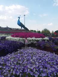 Konya kelebekler vadisi çiçek bahçesi