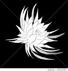 月下美人 花 イラスト 黒バックのイラスト素材 29502787 Pixta