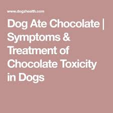 what to do if your dog eats chocolate fetch