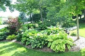 best time of year to plant gardenia bush ground cover creeping jenny trailing large garden with