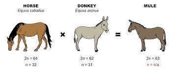 Horse Size Comparison Chart Chromosome Number Bioninja