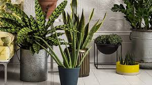 Which Houseplants Are Safe To Grow - Harmless Garden Tips