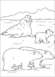 Small Picture Mommy Polar Bear Daddy Polar Bear Lars And Walrus coloring page