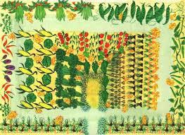 vegetable gardensustainable gardening tips