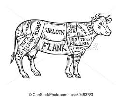 Meat Diagram Cow Engraving Vector