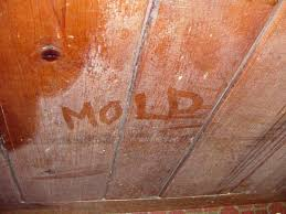 Expert Mold Remediation In Oakville And Mississauga From What Mold In Basement