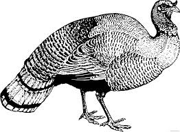 wild turkey clipart black and white. Wonderful Black Black And White Turkey Clipart  Page 2 Of ClipartBlackcom Jpg Library For Wild And