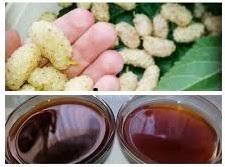 Afbeeldingsresultaat voor شیره توت