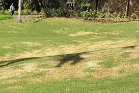 Turf Disease Turfgrass Disease Rome Fontanacountryinn Com
