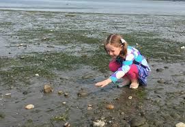8 Tide Pooling Spots To Explore Now In Seattle