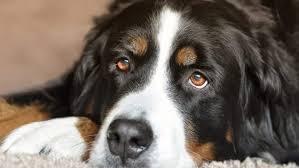 dog stomach cancer