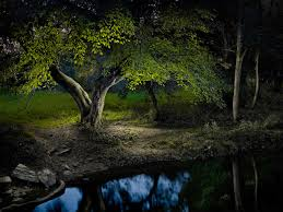 fine art photographer harold ross uses delicate light painting techniques to create surreal landscapes photographed late at night the photographer who has