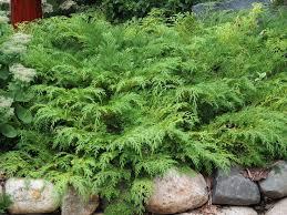 Small Picture Best 25 Evergreen garden ideas on Pinterest Evergreen landscape