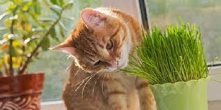 13 simple options to keep cats out of