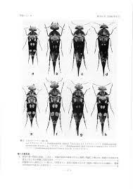 甲虫ニュース