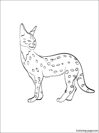 Small Picture Serval printable and coloring page Coloring pages