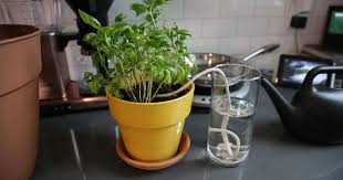 water your plants while you re away