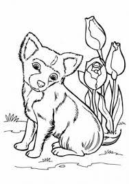 Kleurplaat Cute Hond Puppies Moeilijk Ausmalbild Wolfsspitz