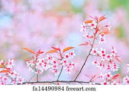 Free Art Print Of Cherry Blossom And Sakura Background