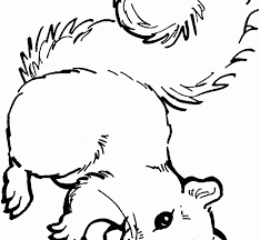 Coloring Pages Squirrel Red Squirrel Don Coloring Page Free Squirrel