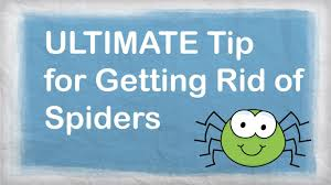 how to kill spiders in house. How To Get Rid Of Spiders Naturally   BEST Repellent For Getting In Your House - YouTube Kill .