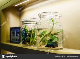 Decorative Betta Fish Bowls Idea of interior home decoration with Betta Fish tank decoration 18