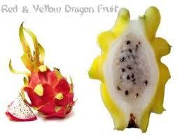 How To Plant Dragon FruitHow To Take Care Of Dragon Fruit Tree