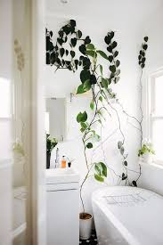 10 X Plants In The Bathroom