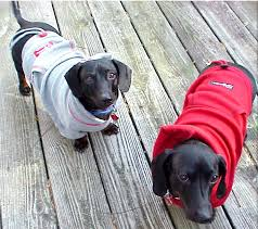 over at martha stewart you will find this comfy cozy warm and fabulous dog sweatshirt and the step by step diy wouldn t your little guy feel snug as a bug