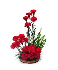 attractive carnation attractive carnation