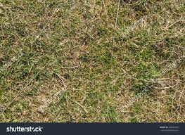 dry grass field background. Green Grass And Dry / Dying Hay Background Withered Yellow Field V